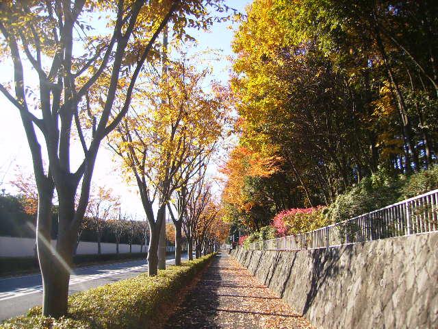 黄葉の歩道27