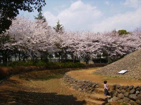 古墳と桜107.JPG
