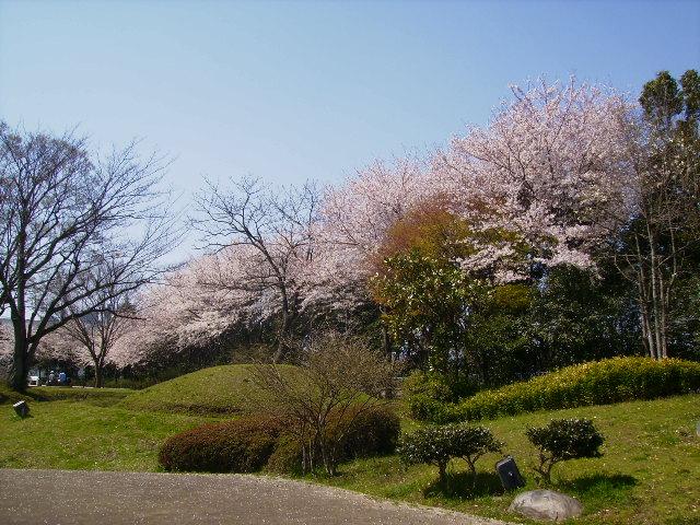 古墳の桜40