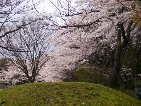 古墳公園の桜21.JPG