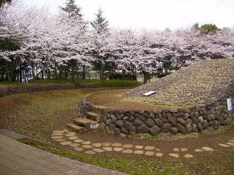 古墳公園の桜29.JPG