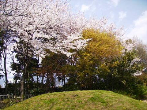 桜と若葉114.JPG