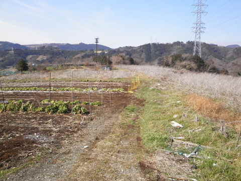 丘の畑16.JPG