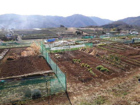 丘の畑17.JPG