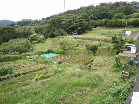 丘の畑37.JPG