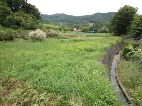 休耕田48.JPG