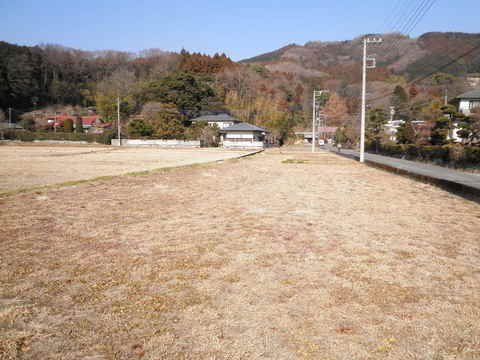 冬の休耕田46.JPG
