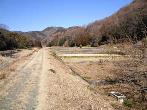 冬の土手道151.JPG