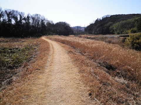 冬の土手道164.JPG