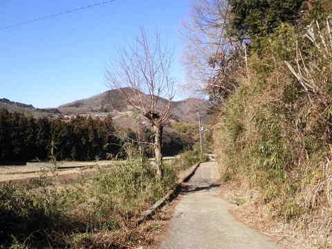 冬の山道137.JPG