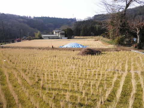 冬の田んぼ09.JPG