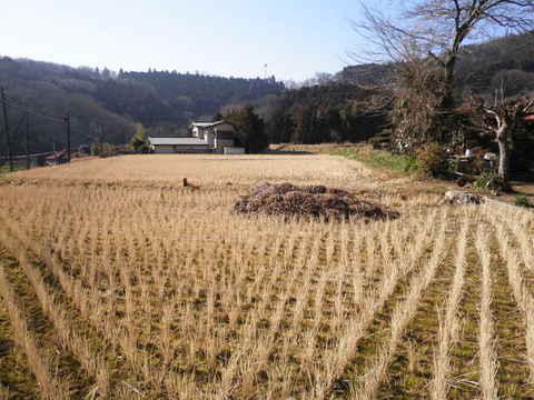 冬の田んぼ11.JPG