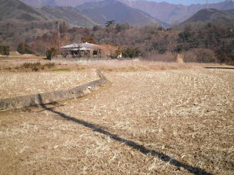 冬の田んぼ12.JPG