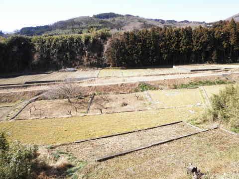 冬の田んぼ139.JPG