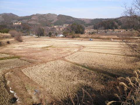 冬の田んぼ33.JPG