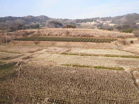 冬の田んぼ34.JPG