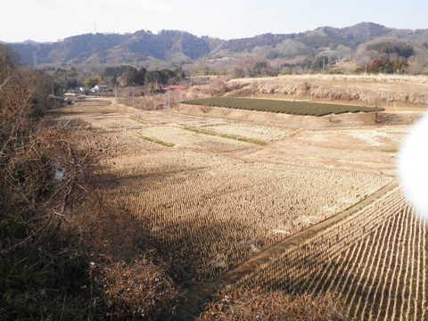 冬の田んぼ36.JPG