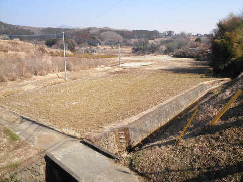 冬の田んぼ39.JPG