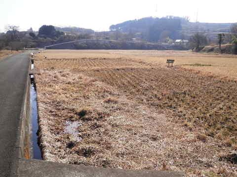 冬の田んぼ44.JPG
