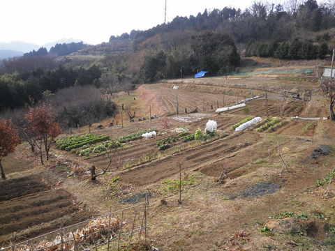 冬の畑21.JPG