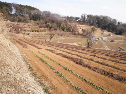 冬の畑44.JPG