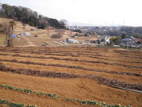 冬の畑45.JPG