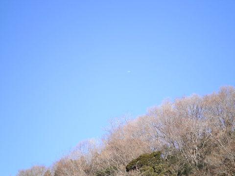 冬木と飛行機146.JPG