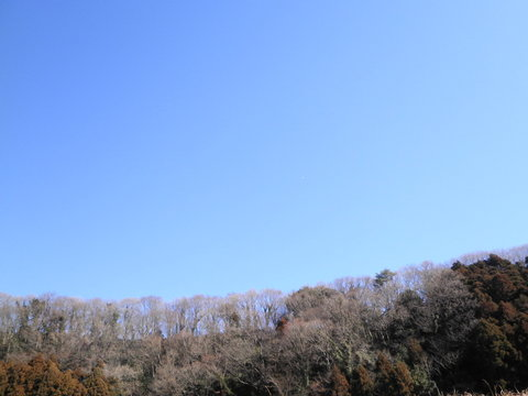 冬木と飛行機149.JPG