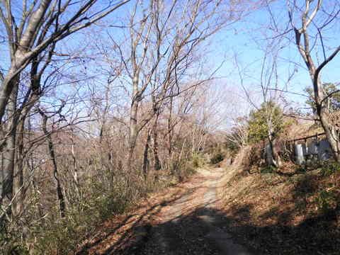 冬木の林道130.JPG