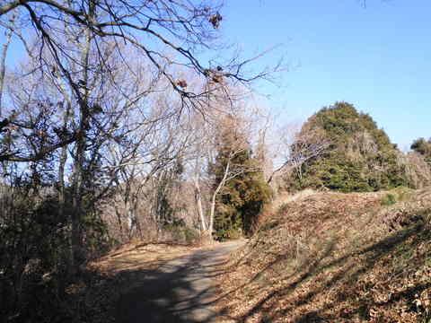 冬木の林道134.JPG