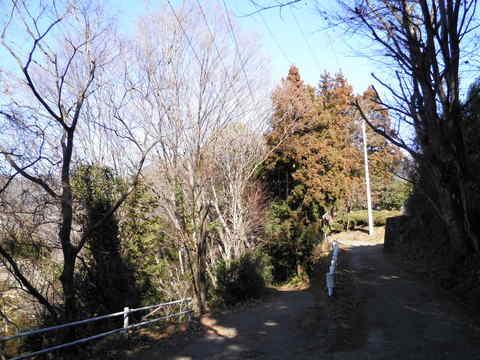 冬木の林道135.JPG