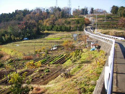 初冬の坂道50.JPG