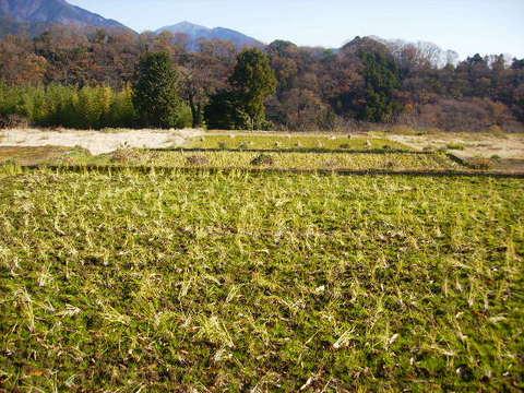 初冬の田んぼ43.JPG