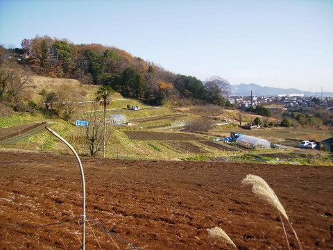 初冬の畑77.JPG