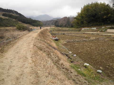 初春の土手道53.JPG