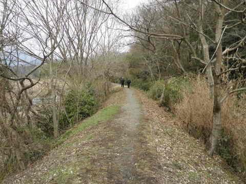初春の土手道61.JPG
