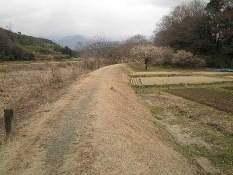 初春の土手道65.JPG