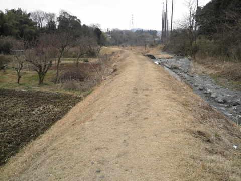 初春の土手道67.JPG
