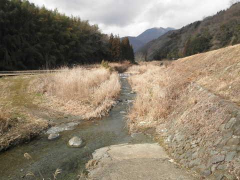 初春の川35.JPG