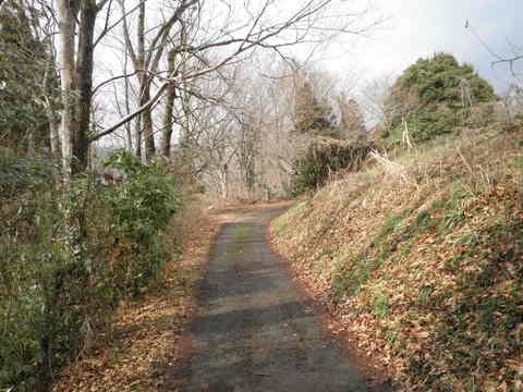 初春の林道20.JPG