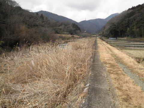初春の河原33.JPG