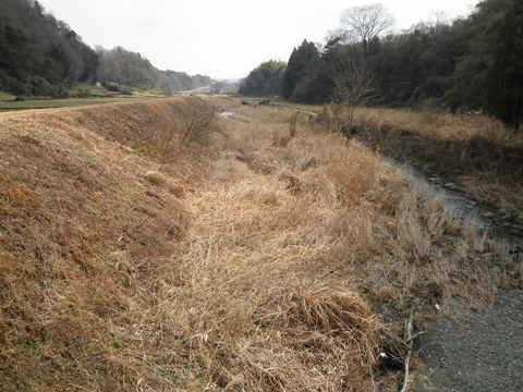 初春の河原34.JPG