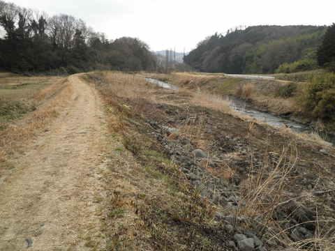 初春の河原55.JPG