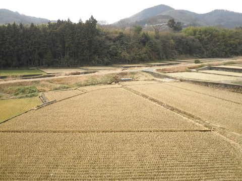 初春の田んぼ28.JPG