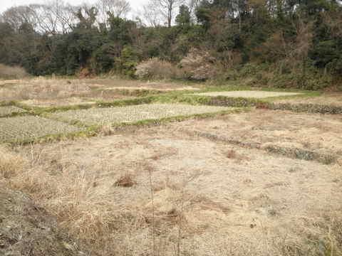 初春の田んぼ57.JPG