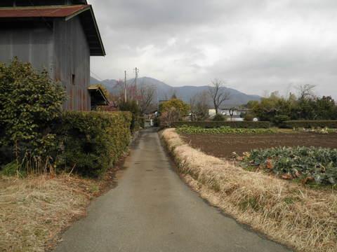 初春の田舎道10.JPG