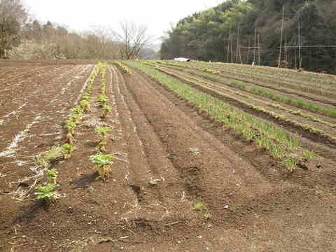 初春の畑47.JPG
