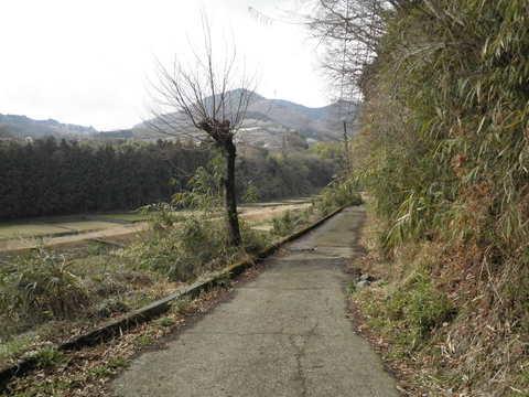 初春の農道24.JPG