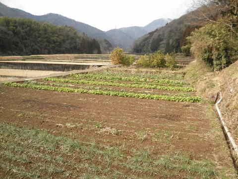 初春の野菜畑29.JPG