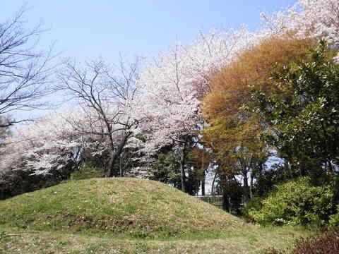 古墳と桜37.JPG